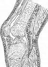 Упражнения для суставов. Коленный сустав